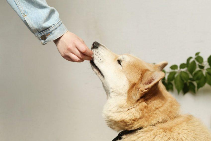אוכל לכלבים (צילום: Maksim Goncharenok www.pexels.com)