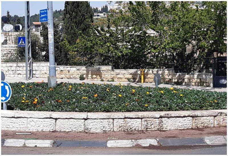 צמחים רב עונתיים (צילום: דוברות עיריית ירושלים)