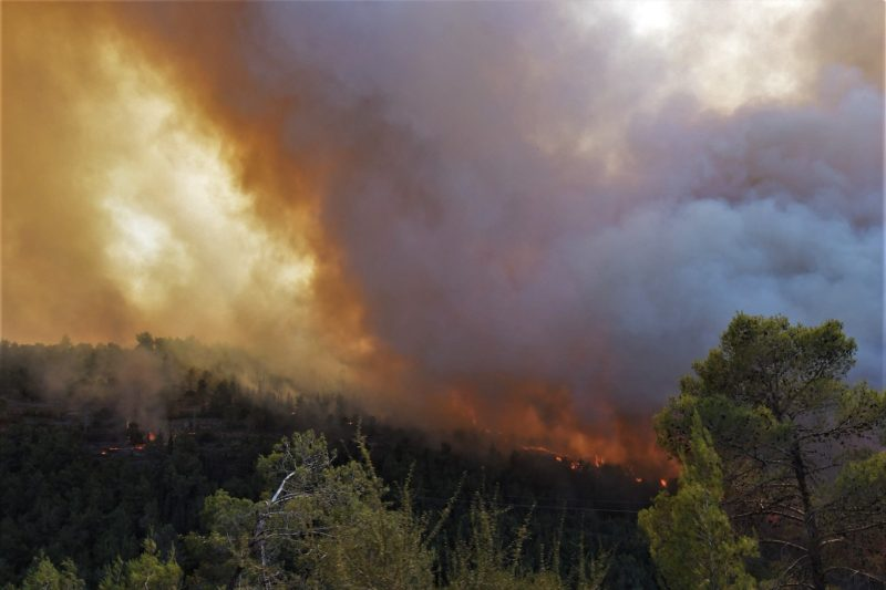 השריפה בהרי ירושלים (צילום: דודו בן אור)