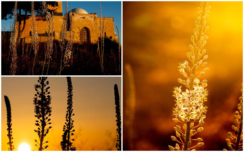 סימן מובהק לסתיו - חצבים בירושלים (צילומים: אורטל צבר)