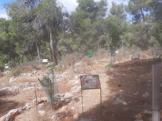 """פארק ארץ התנ""""ך (צילום: אדם אקרמן)"""